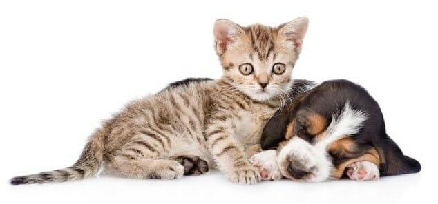 10 Nombres para tu gato
