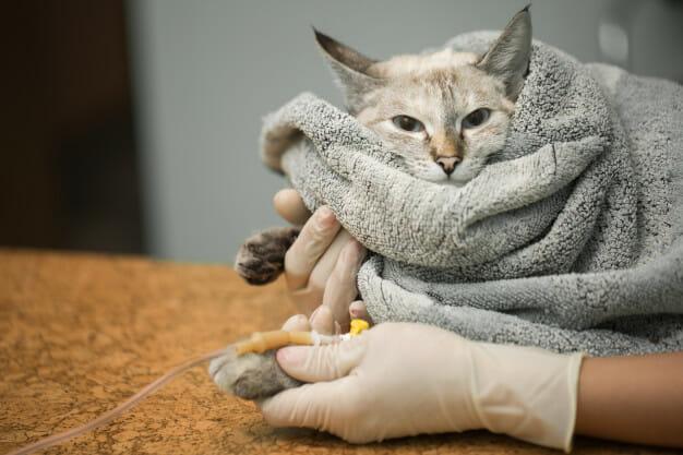 10 Consejor para la salud de tu gato